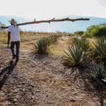 Opposition to NOM 199 for Agave Distillates